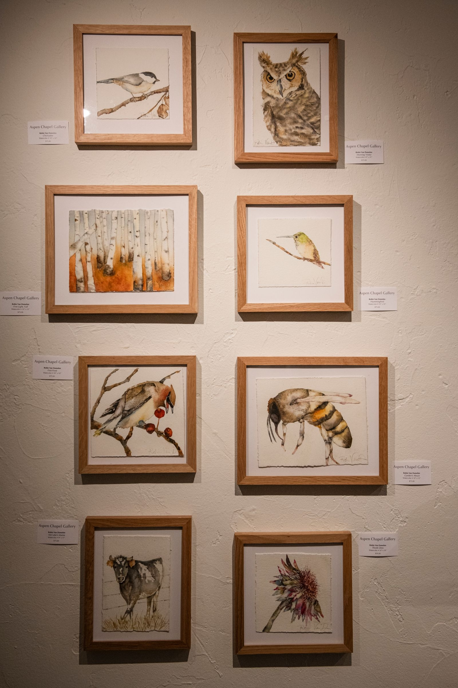 Watercolor prints by Robin Van Domelen hang in the Aspen Chapel Gallery for the Small Wonders holiday show and sale on Tuesday, Nov. 17, 2020. (Kelsey Brunner/The Aspen Times)