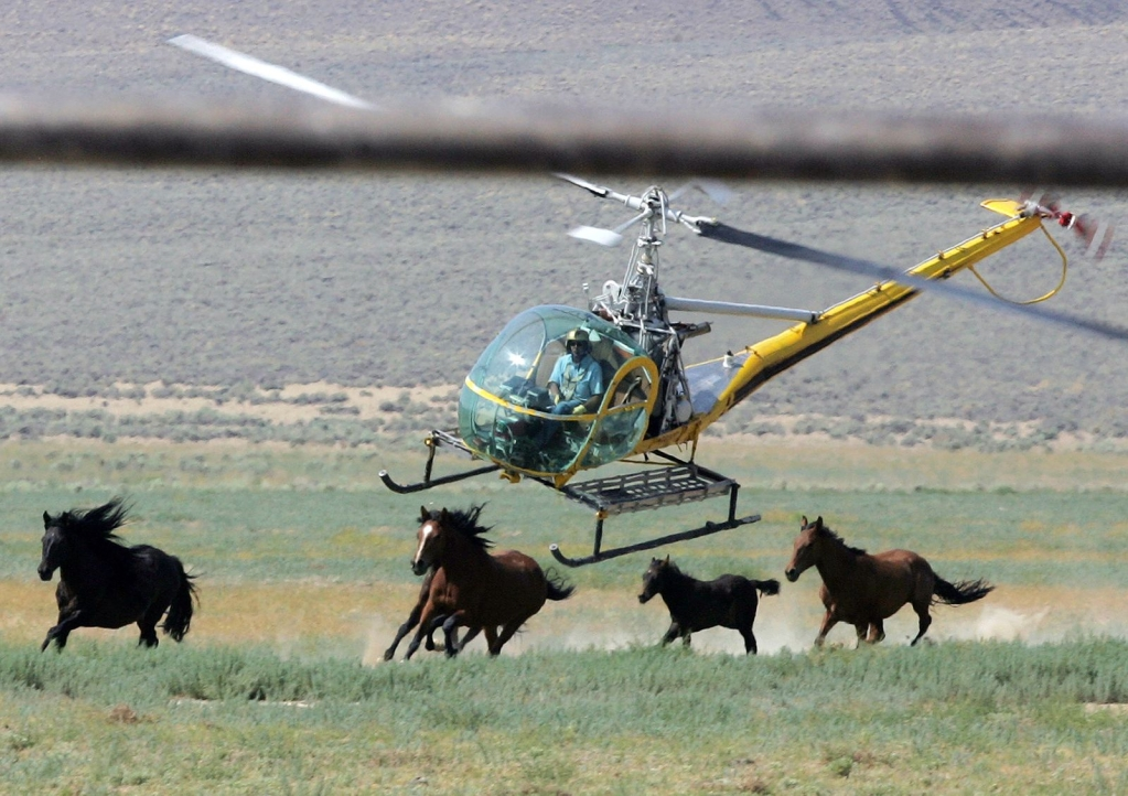 BLM seeks to cut wild horse numbers in Colorado by more than half through roundups