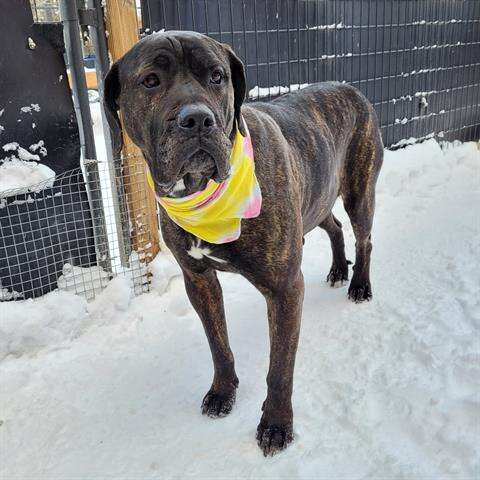 Pet Scene: Summit County's adoptable pets for the week of May 9