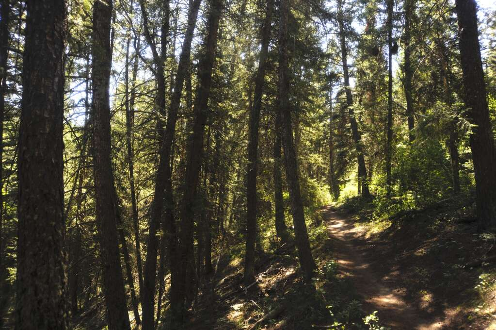 Much of the Red Dirt Trail is sunny, but one section early on cuts through section of evergreen forest. (Photo by Shelby Reardon)