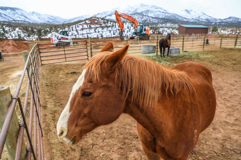 Latigo checks out the construction on the new barn and indoor arena site March 23 at the Mountain Valley Horse Rescue.