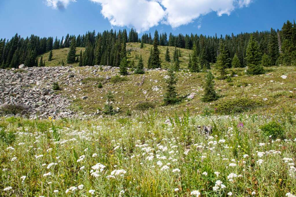 Looking up at a section of what is included in the Pandora's expansion proposal, the terrain will curve skiers left to follow the inbound lines to the new Pandora Lift on Aspen Mountain on Thursday, August 12, 2021. (Kelsey Brunner/The Aspen Times)