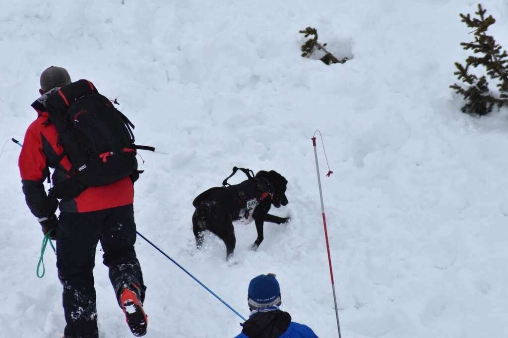 Keena, a black Lab, and her handler, Doug Lesch, search for someone buried in a mock avalanche on Thursday, March 11. | Photo by Sawyer D'Argonne / sdargonne@summitdaily.com