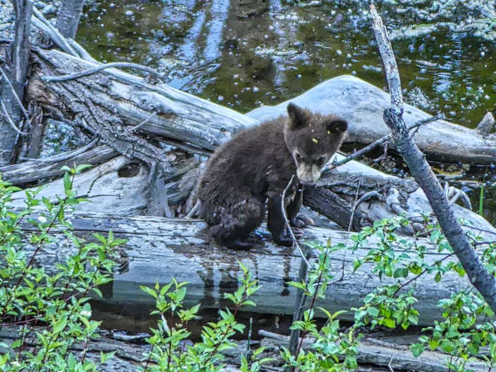 Reader Kathryn Rabinow submitted this photo earlier this month of what she called