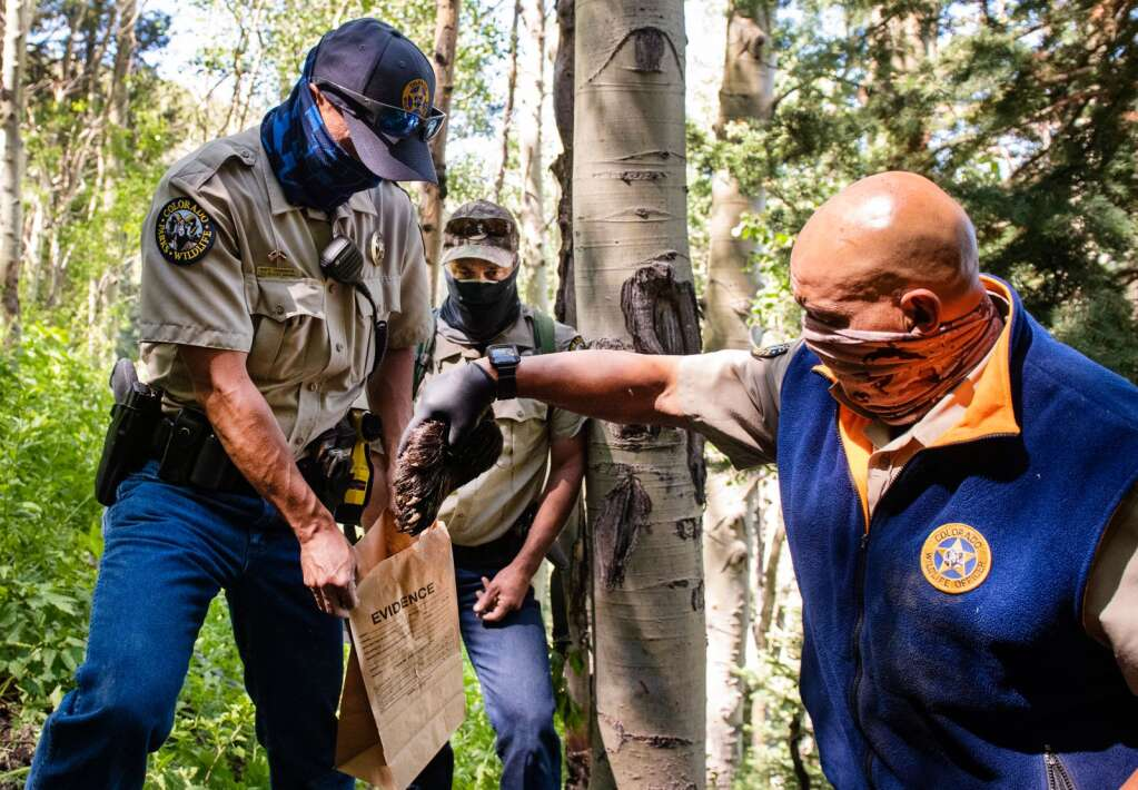 Colorado Parks and Wildlife officers collect evidence from a bear that was euthanized in an abandoned mine on Aspen Mountain, Friday, July 10, 2020. The euthanized bear was suspected of attacking an Aspen man early on Friday morning. (Kelsey Brunner/The Aspen Times)