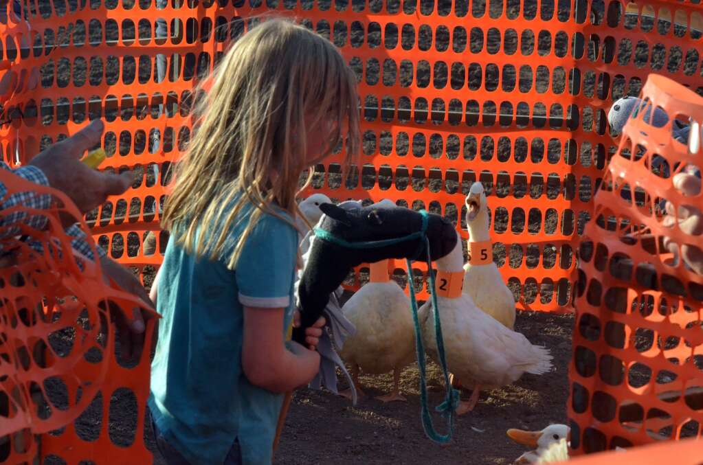 Kymber Walton of Hayden holds on to her stick horse as another gathers and sorts ducks into a pen at the Routt County Fair. (Photo by Bryce Martin)
