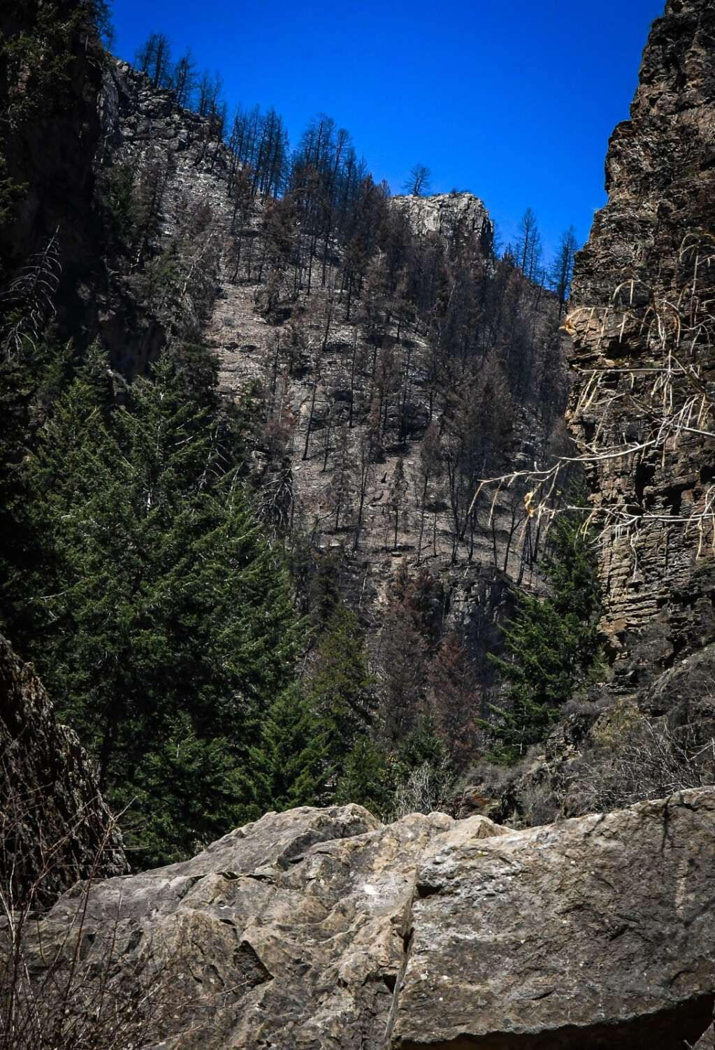 A burn area high on the slope above the Hanging Lake trail after last year's Grizzly Creek Fire swept through Glenwood Canyon. |Chelsea Self / Post Independent