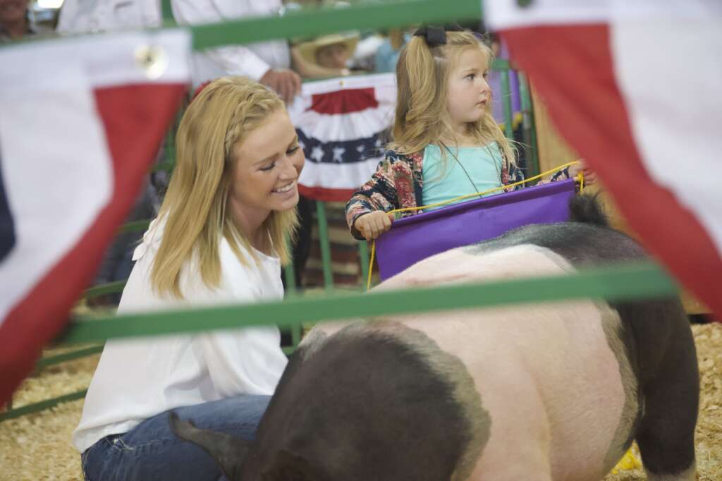 Reese Weber tends to her grand champion pig at the Moffat County Fair livestock auction Saturday evening. | Cuyler Meade / Craig Press