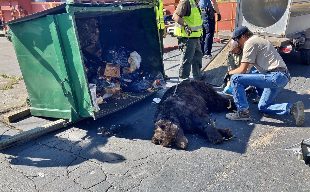 """Wild officials push residents to be """"bear-conscious"""", leave young animals alone"""