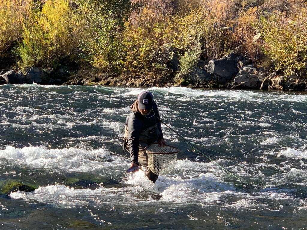 Chuck Ragan landing a fish in fast water on the Lower Yuba River.