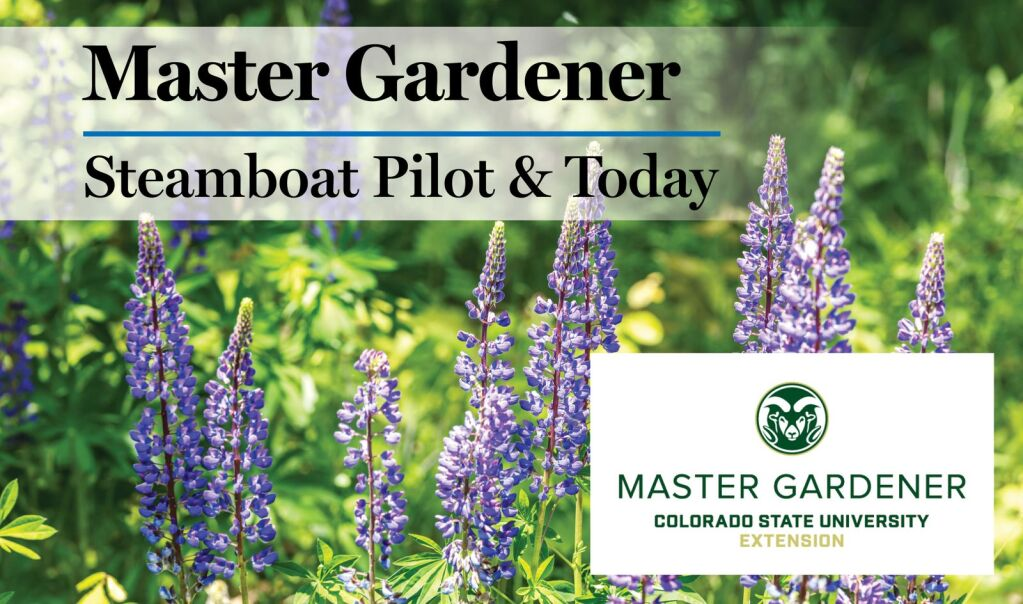 Master Gardener: What is Plant Select?