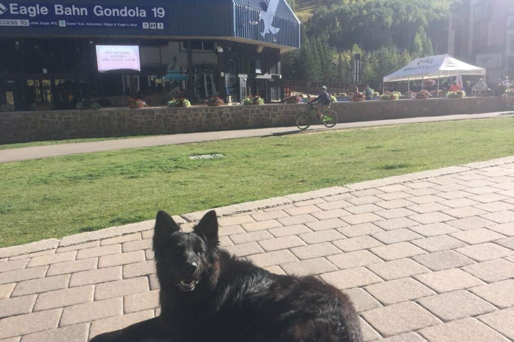 Blaze takes a quick break in front of the Eagle Bahn Gondola in Vail.   Daniel Levine, Special to the Daily