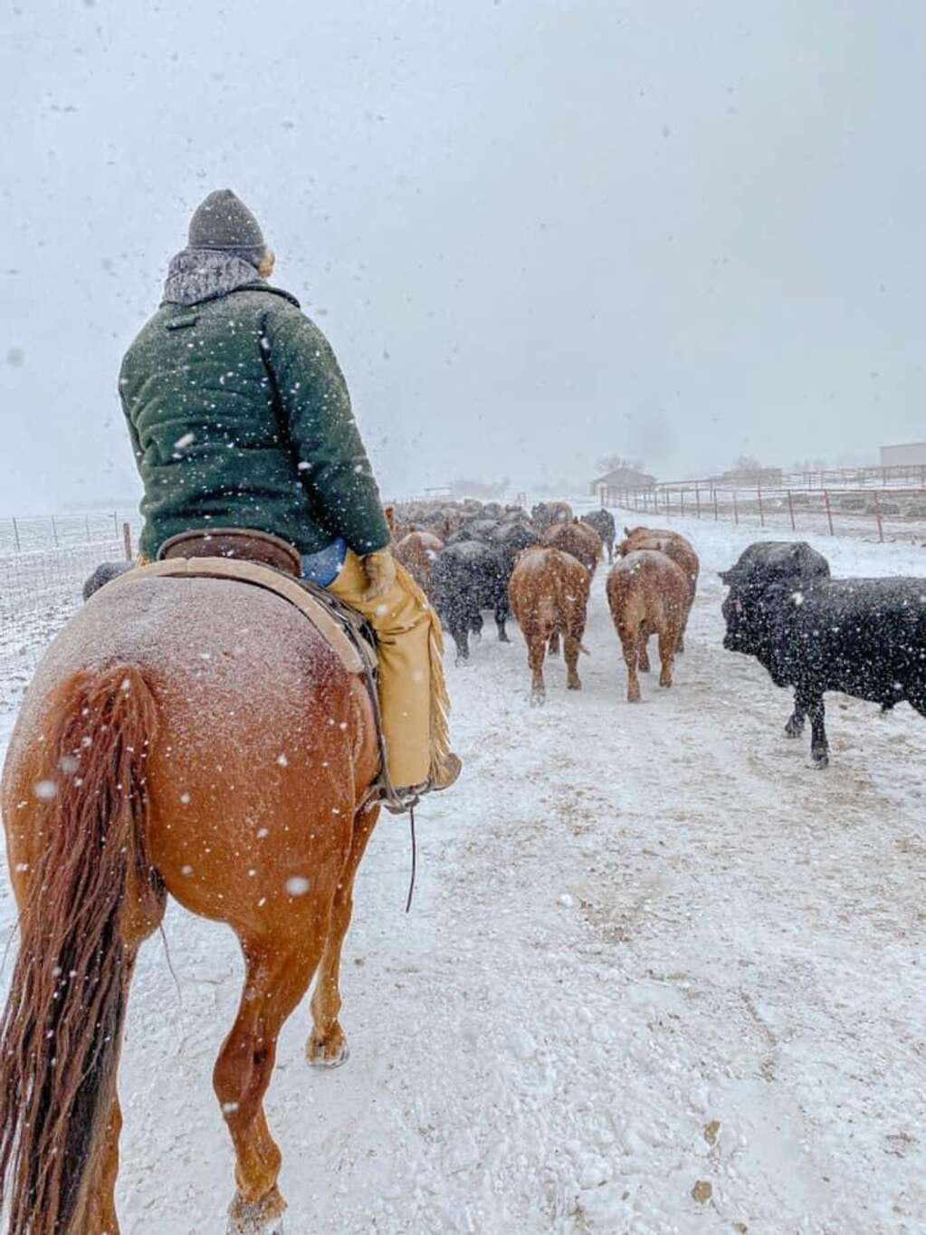 A good horse, never needs a engine block heater and doesn't gel up. Courtesy of RA Brown Ranch