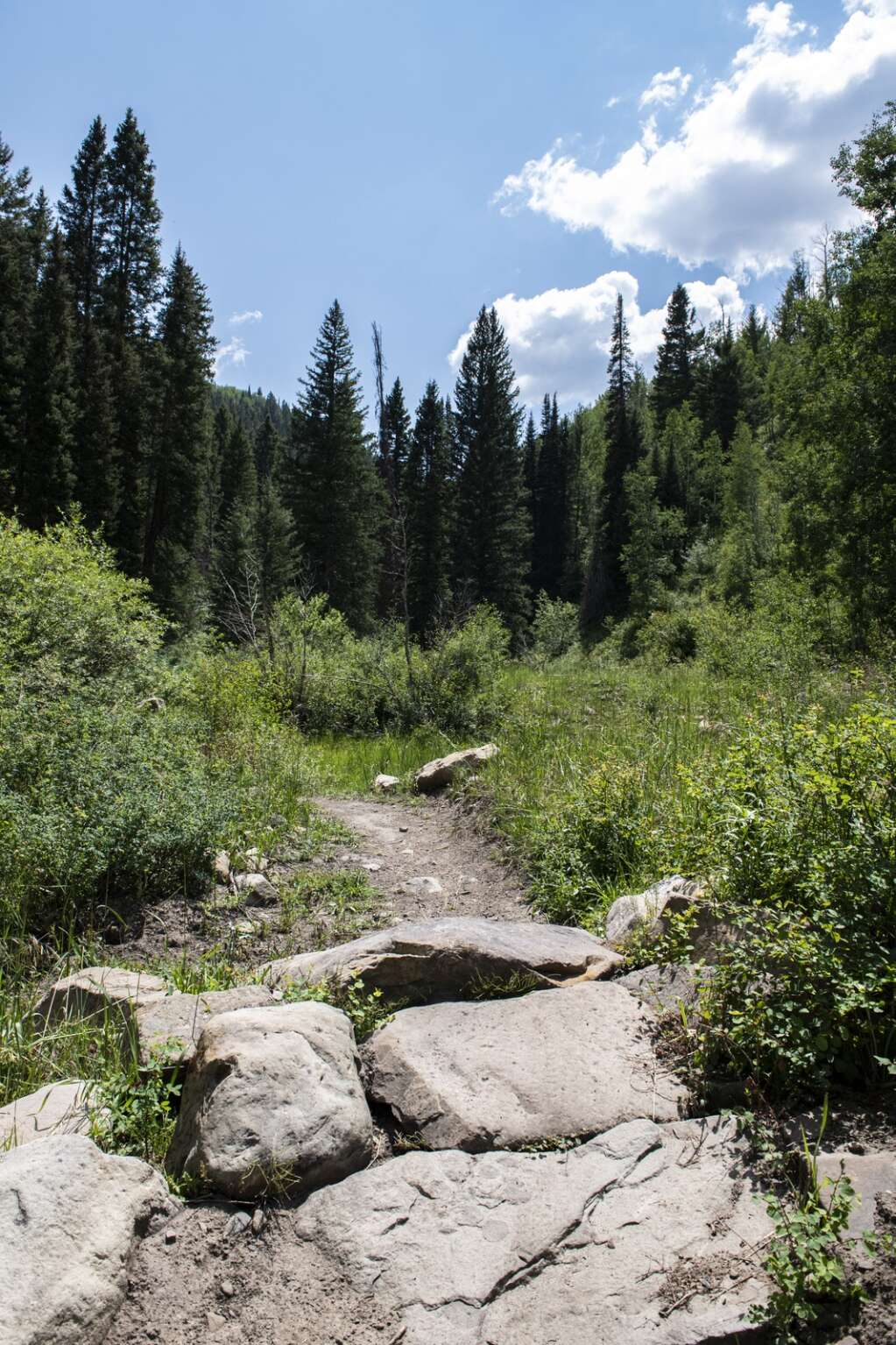 The Dutch Creek Trail has a variety of technical climbing features like rock gardens, creek crossings, and narrow corridors along its moderate difficulty single track in Coal Basin Ranch near Redstone on Thursday, July 29, 2021. (Kelsey Brunner/The Aspen Times)