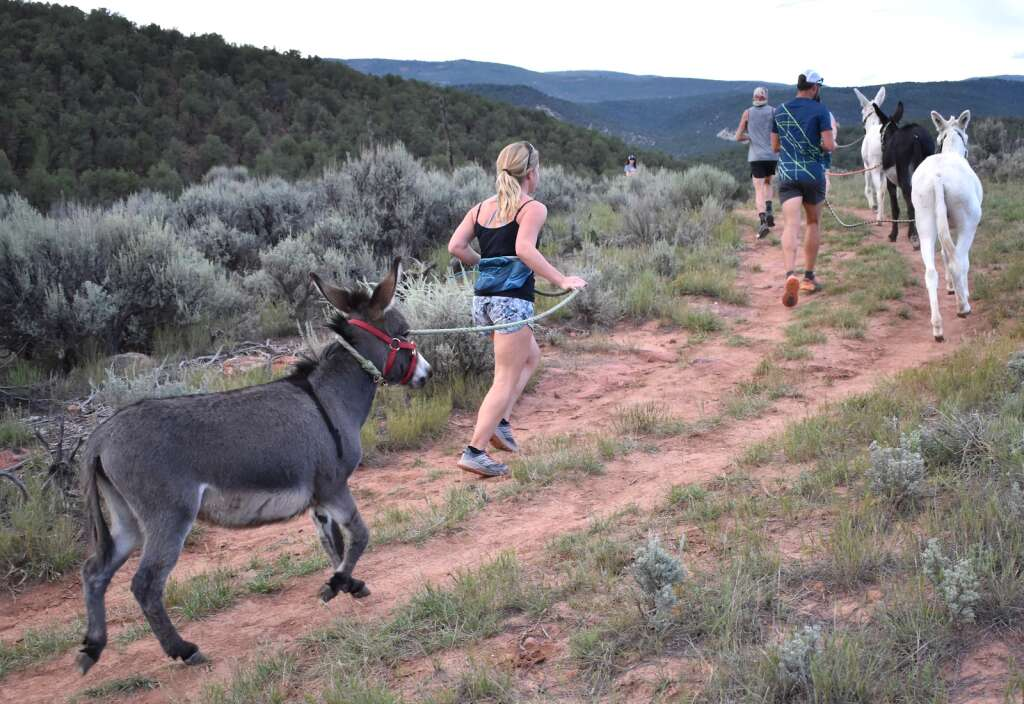 Runners and their burros take to the Sutey Ranch Trail during the Independence Run & Hike burro run on Aug. 26, 2021. | Tami Stroud/Courtesy photo