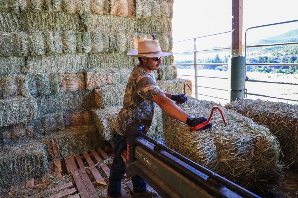 Joel Aguilar loads up hay for the horses at the Mountain Valley Horse Rescue June 2020 in McCoy. Aguilar not only trains the horses but also helps tend to them on an almost daily basis.