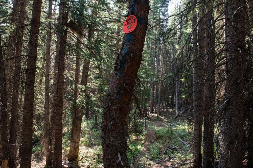 """A marker for """"Rock Gully"""" is nailed to a tree in the Pandora terrain area that offers trails for both intermediate and expert skiers on Aspen Mountain on Thursday, August 12, 2021. (Kelsey Brunner/The Aspen Times)"""