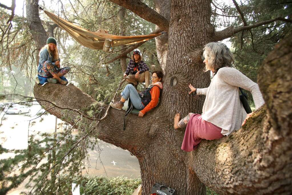 Tree sitters peacefully protest PG&E's decision to cut down a Nevada City heritage tree Sept. 18. Many joined in the fight to protect more than 200 trees in Nevada City slated to be cut down by PG&E. The heritage tree was eventually cut down though the group was able to save part of one tree.   Photo: Elias Funez