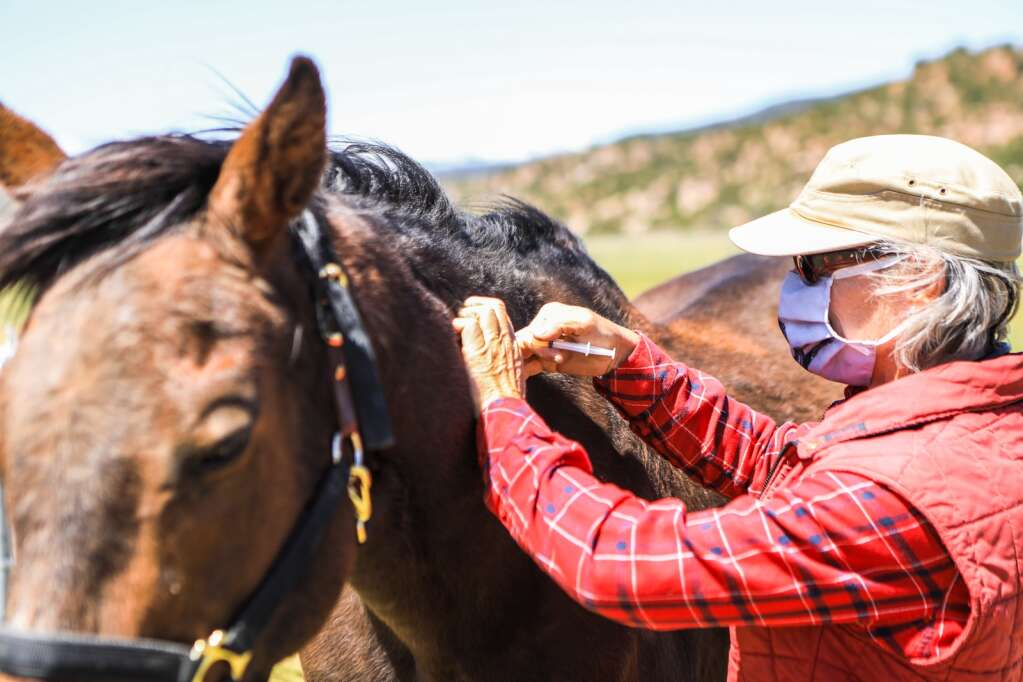 Silvia Stocker, large animal veterinarian, vaccinates horses at the Mountain Valley Horse Rescue May 2020 in McCoy.