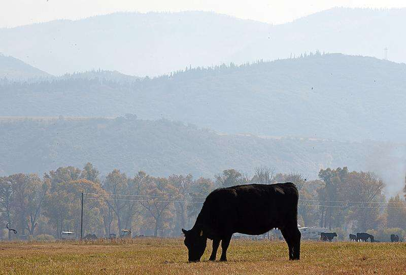 Ranchers say proposed animal cruelty ballot measure would be 'death knell' for Colorado agriculture industry