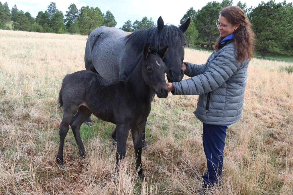 Wearing a coat about the same color as the horses, Jeri Anderson, the youngest daughter of John and Sheri Grint, spends much of her free time in the pasture making friends with the family's mares and colts. These blue roans are Jessie and Londyn, a filly that was born in April.