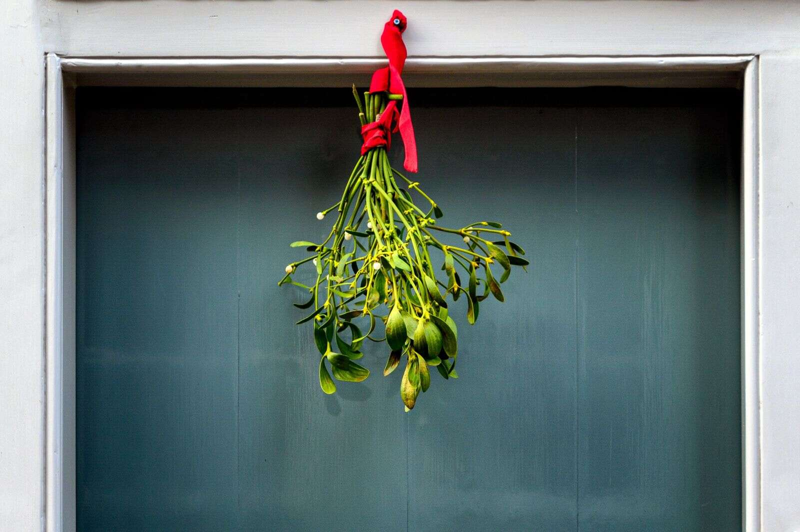 It is believed that kissing under mistletoe may have had its beginnings during the Greek festival of Saturnalia. | Unsplash photo