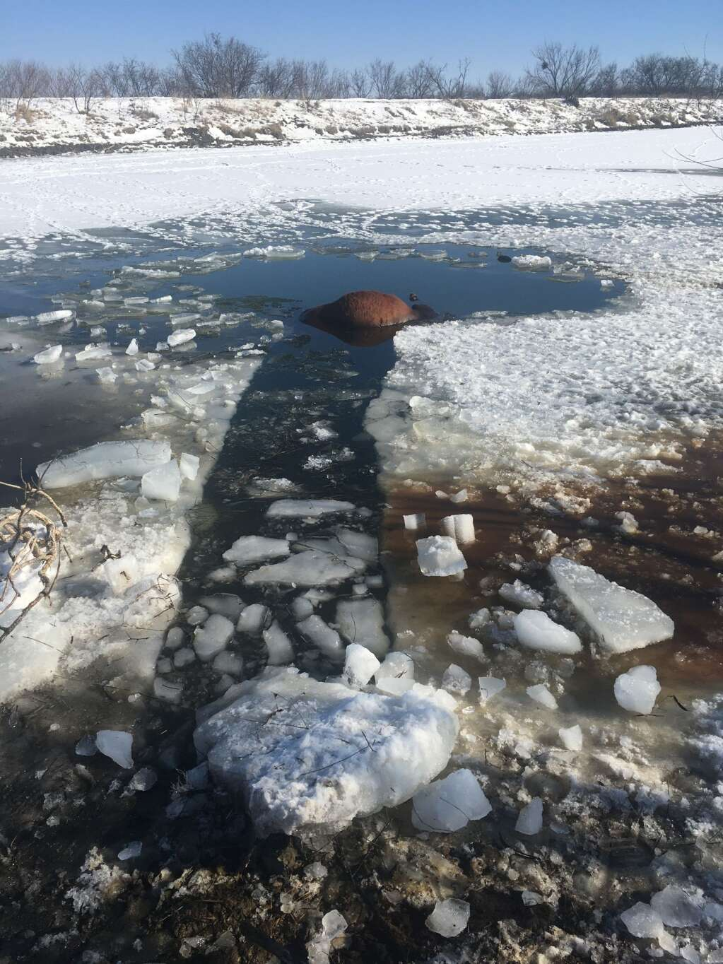 Once cattle went through the ice, the ranchers chopped channels in the ice to reach them. Courtesy of Todd McCartney.