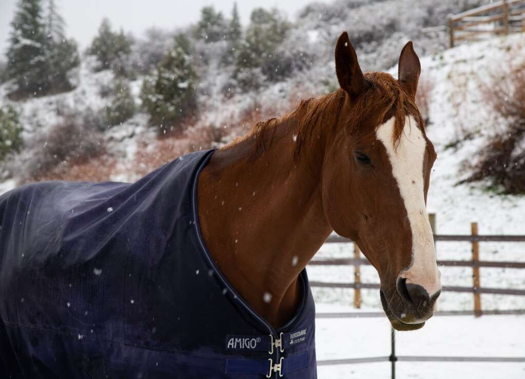 Horses at the Cordillera Equestrian Center enjoy a change in scenery Monday morning.   Mort Mullikan / Special to the Daily