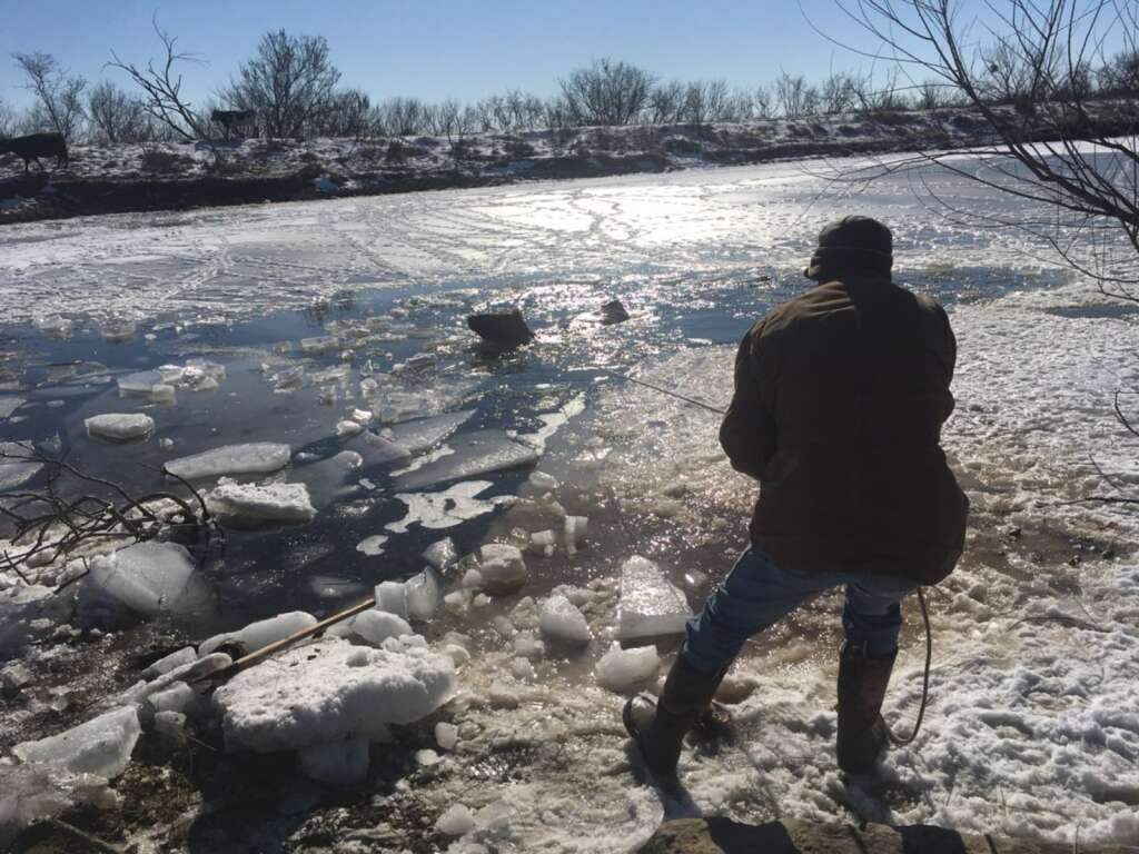 Todd McCartney roped a stranded cow and helped to pull her through the ice channel to the bank. Courtesy of Todd McCartney