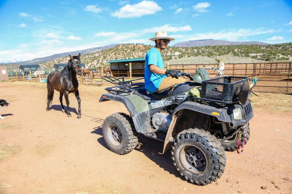 Joel Aguilar corals a horse for training at the Mountain Valley Horse Rescue May 2020 in McCoy.