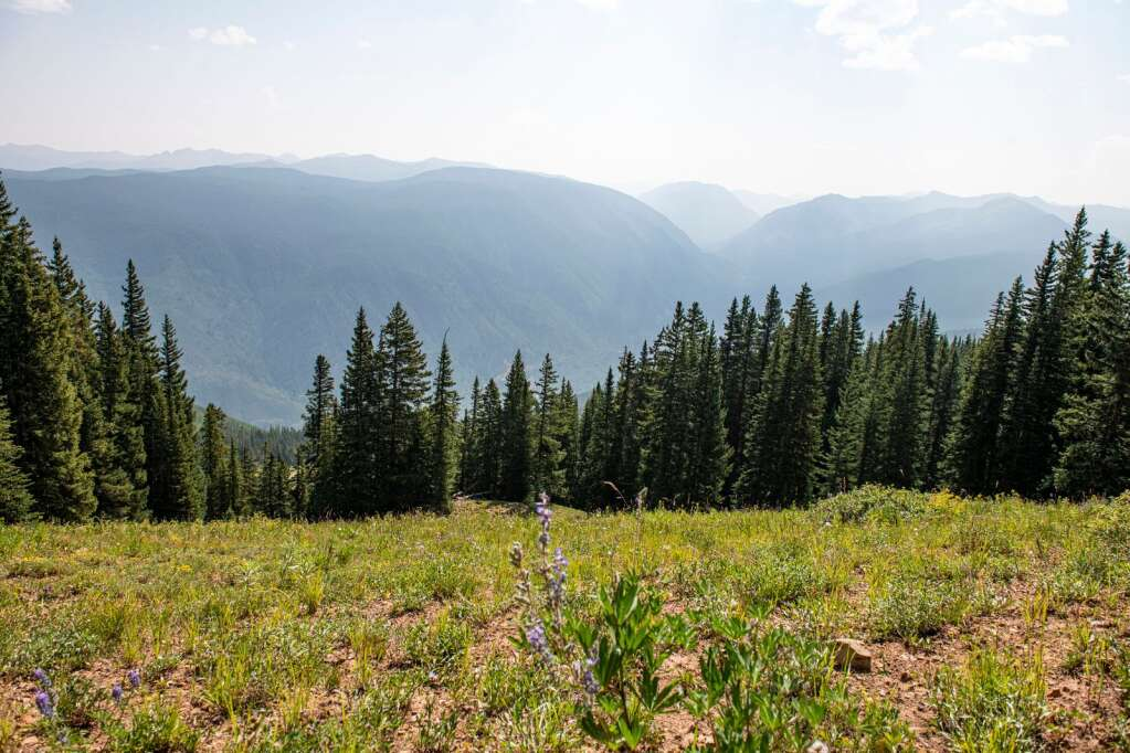 A wide meadow is proposed to be part of the glades that would be included in the Pandora expansion on Aspen Mountain on Thursday, August 12, 2021. (Kelsey Brunner/The Aspen Times)