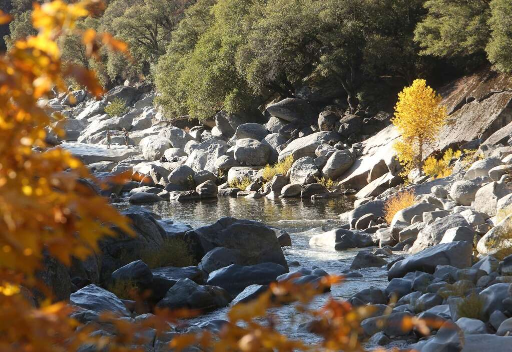 Fall colors have hit the South Yuba River as seen from the Highway 49 bridge over the weekend where a lone cottonwood tree sticks out with its yellowed leaves.