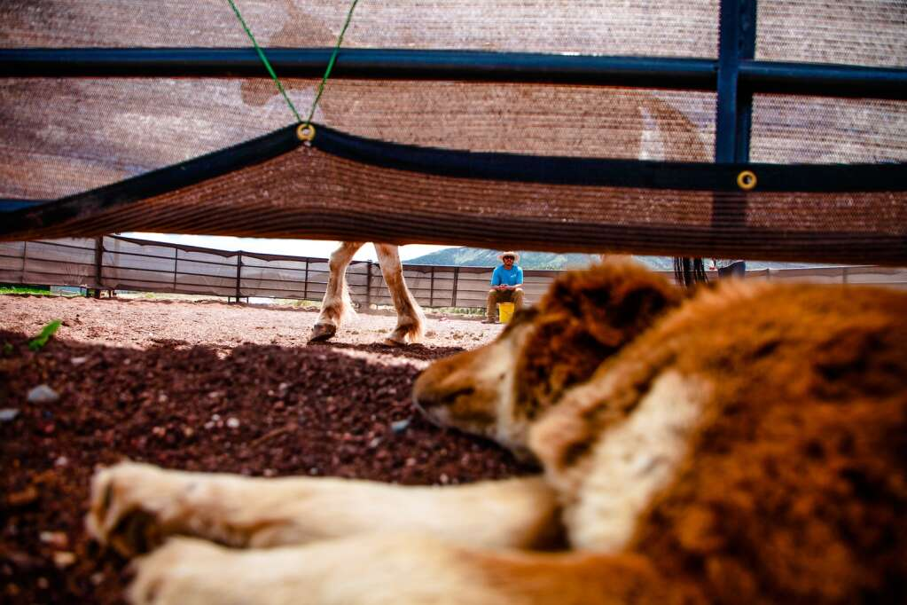 A dog watches horse training at Mountain Valley Horse Rescue May 2020 in McCoy.
