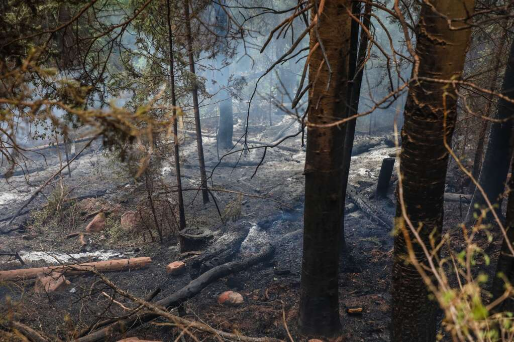 Scarred and burned trees remain after flames of the Sylvan Fire moved through Thursday near Eagle. | Chris Dillmann/cdillmann@vaildaily.com