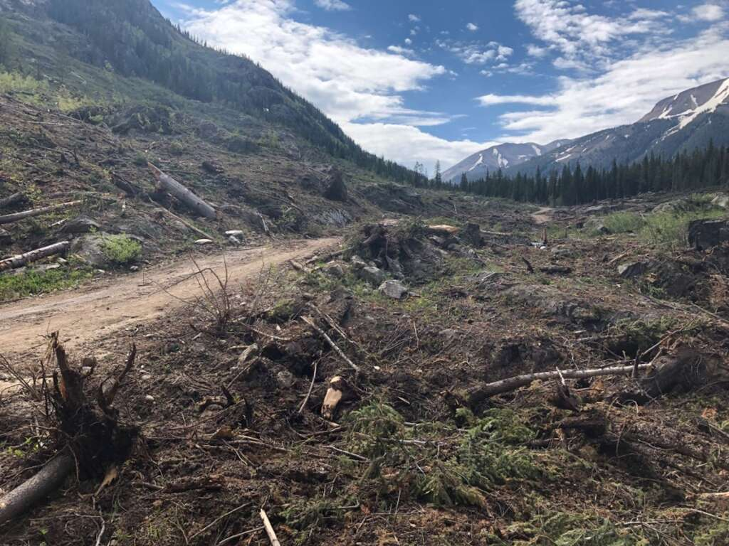 An avalanche destroyed numerous spruce trees along Lincoln Creek in winter 2019, as shown in this June 2019 image. There is concern that the leftover rotting timber could attract spruce beetles. | Scott Condon/The Aspen Times
