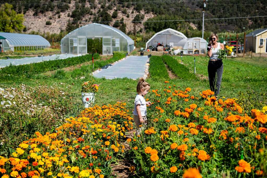 Two Roots Farm shoppers mill through the flower field in Emma on Friday, Sept. 17, 2021. (Kelsey Brunner/The Aspen Times)