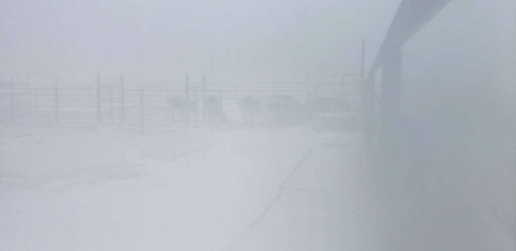 The strong winds caused a ground blizzard. | Troy and Theresa Taylor; Triple T Livestock; Carr; Colorado.
