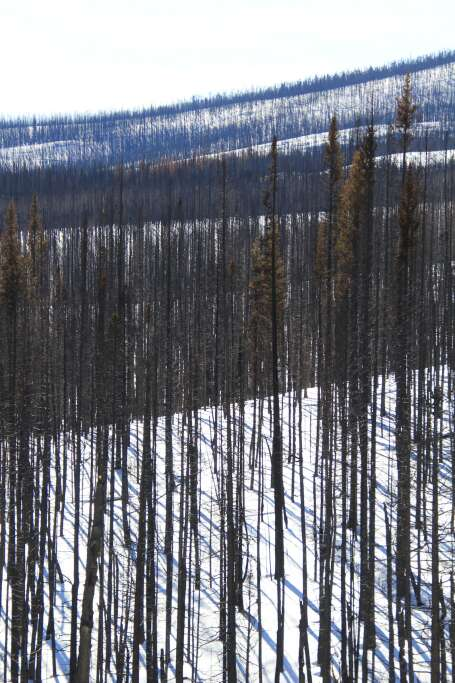The East Troublesome Fire area photographed on Christmas Day 2020. | Photo by Allen Best