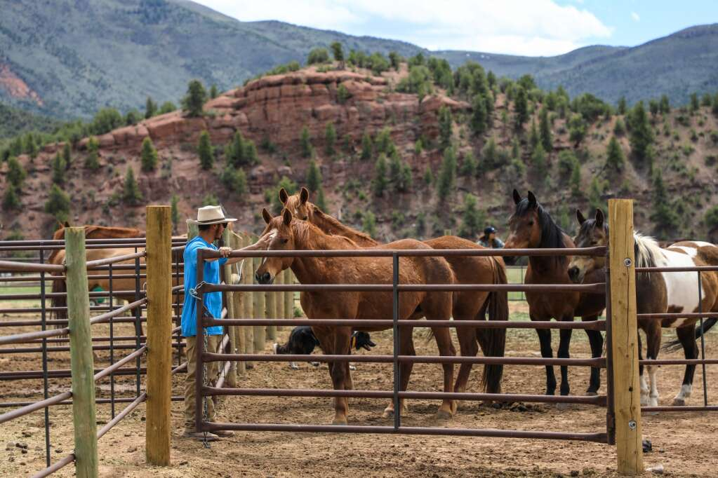 Joel Aguilar gives the horses love at Mountain Valley Horse Rescue May 2020 in McCoy.
