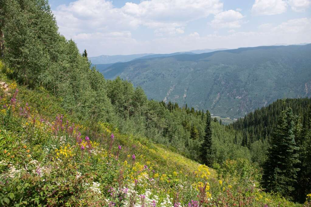 A wildflower-covered steep grade looks out over Highway 82 and would be a part of the Pandora expansion on Aspen Mountain on Thursday, August 12, 2021. (Kelsey Brunner/The Aspen Times)