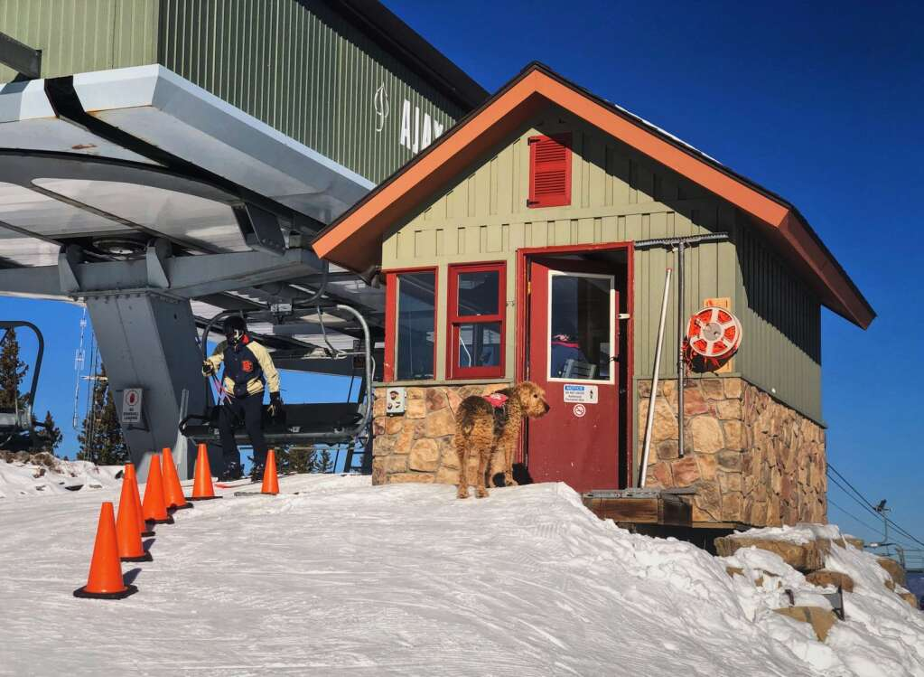 Aspen Mountain Ski Patrol dog, Zoot, stands outside the Ajax Lift operations building as a snowboarder unloads at the top of the mountain on Monday, Nov. 30, 2020.