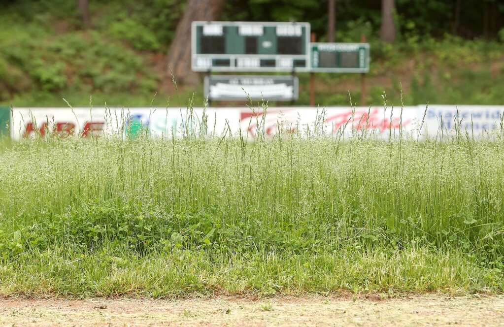 Weeds and tall grass take to the outfield in front of the Al Murray Memorial Scoreboard in Nevada City's Pioneer Park where Nevada City Little Leaguers would normally be playing this time of year in May. | Photo: Elias Funez