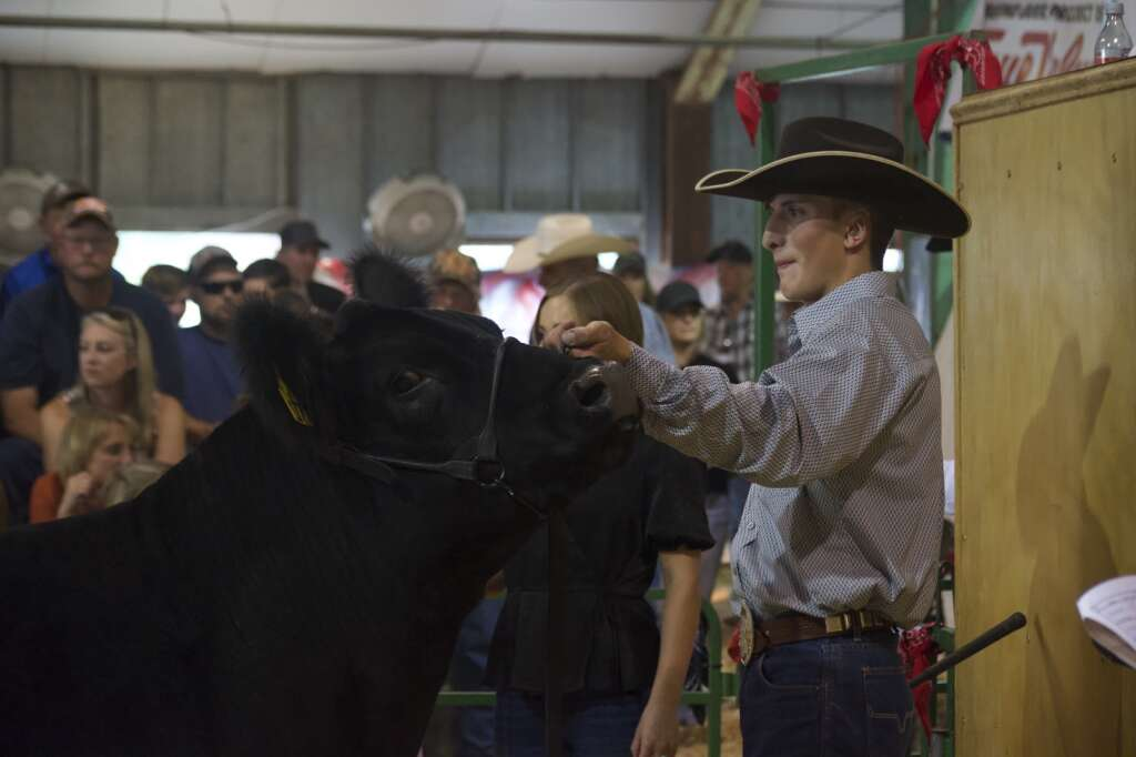 Michael Voloshin displays his grand champion and reserve champion steer at the Moffat County Fair livestock auction Saturday evening. | Cuyler Meade / Craig Press