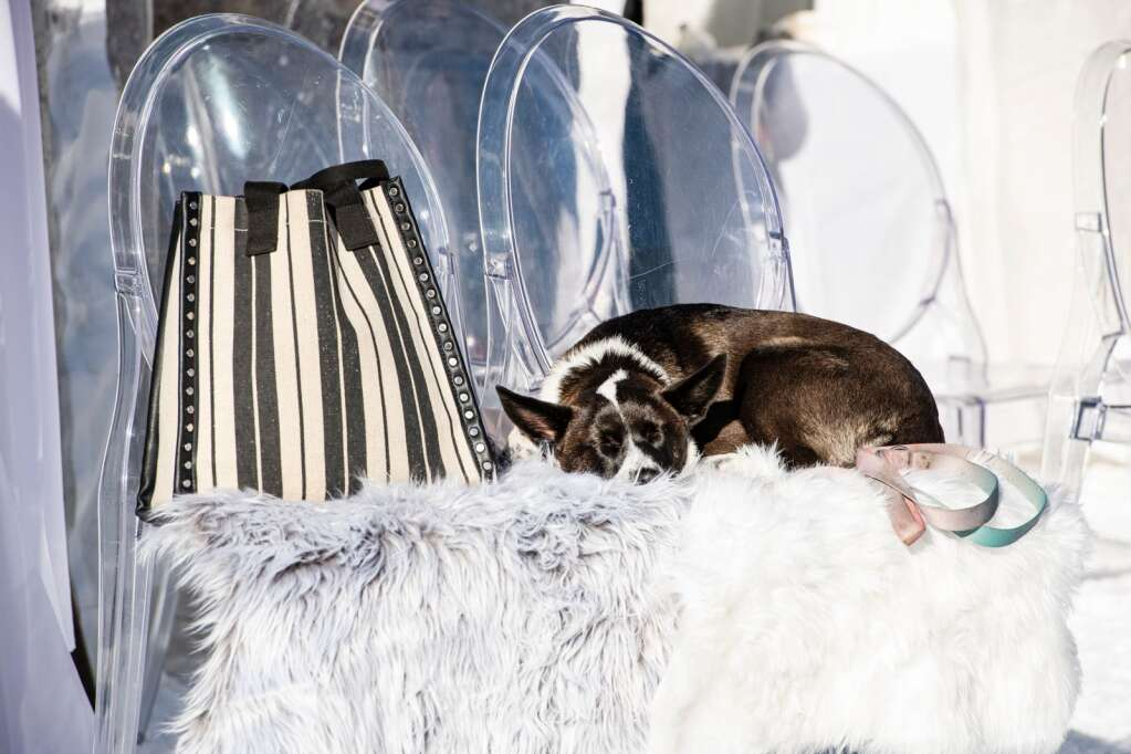 A dog takes a nap in the sun outside the team tents at the Ajax Cup at Aspen Highlands on Wednesday, Dec. 30, 2020. (Kelsey Brunner/The Aspen Times)
