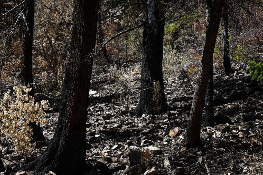 Trees and vegetation sit charred along the Hanging Lake Trail after last year's Grizzly Creek Fire. |Chelsea Self / Post Independent