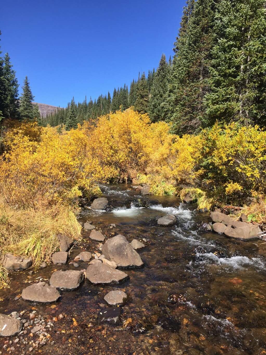 The Mandall Lakes trail in the Flat Tops Wilderness is gorgeous in the fall as well. (Photo by Shelby Reardon)