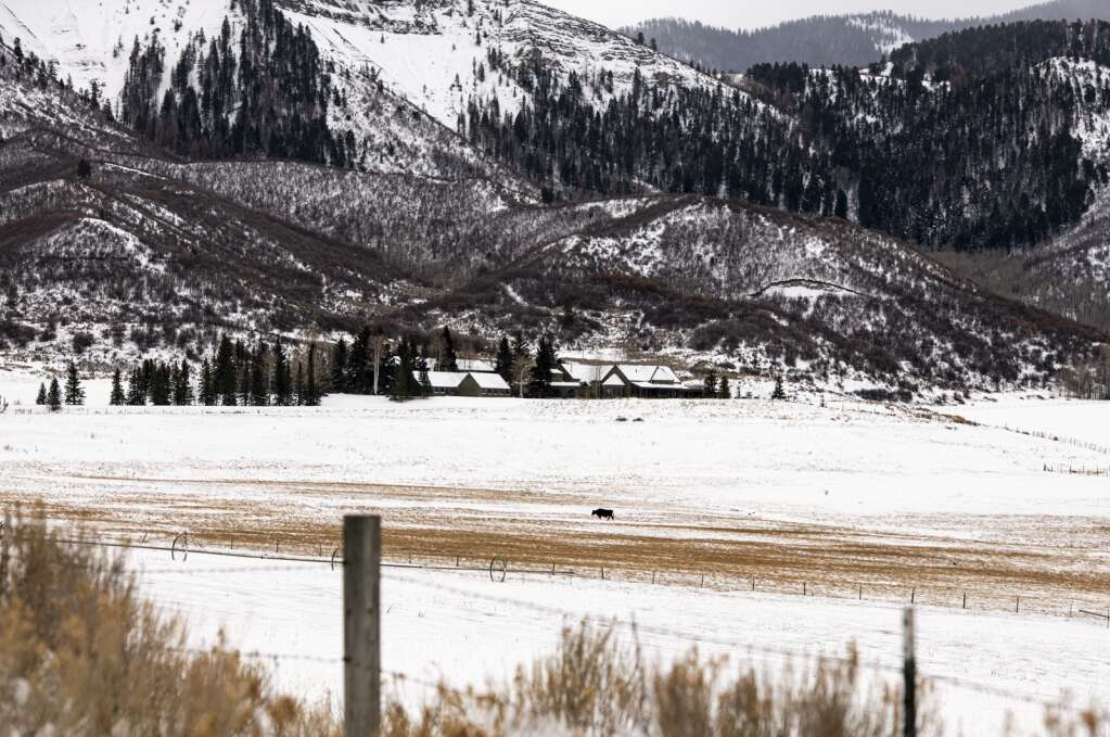 A lone cow walks across the field at St. Benedict's Monastery in Snowmass on Wednesday, Dec. 23, 2020. (Kelsey Brunner/The Aspen Times)