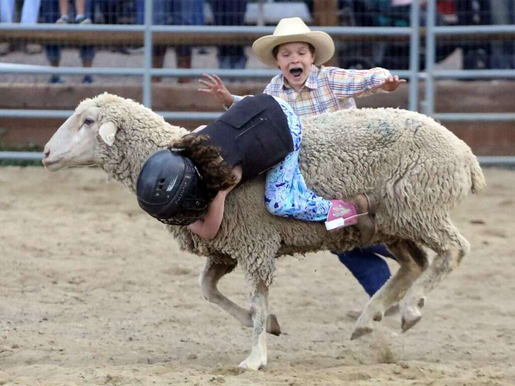 Children participate in the popular mutton busting competition during the Snowmass Rodeo on Wednesday, July 31, 2019. | Austin Colbert/Snowmass Sun file photo