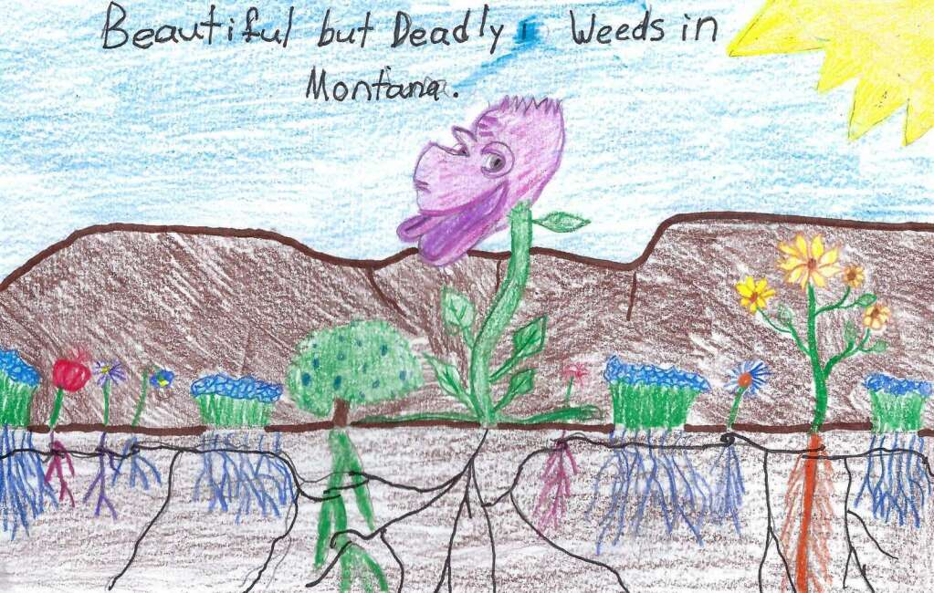 Fourth Grade – Jed Dixon, SY School, Custer County