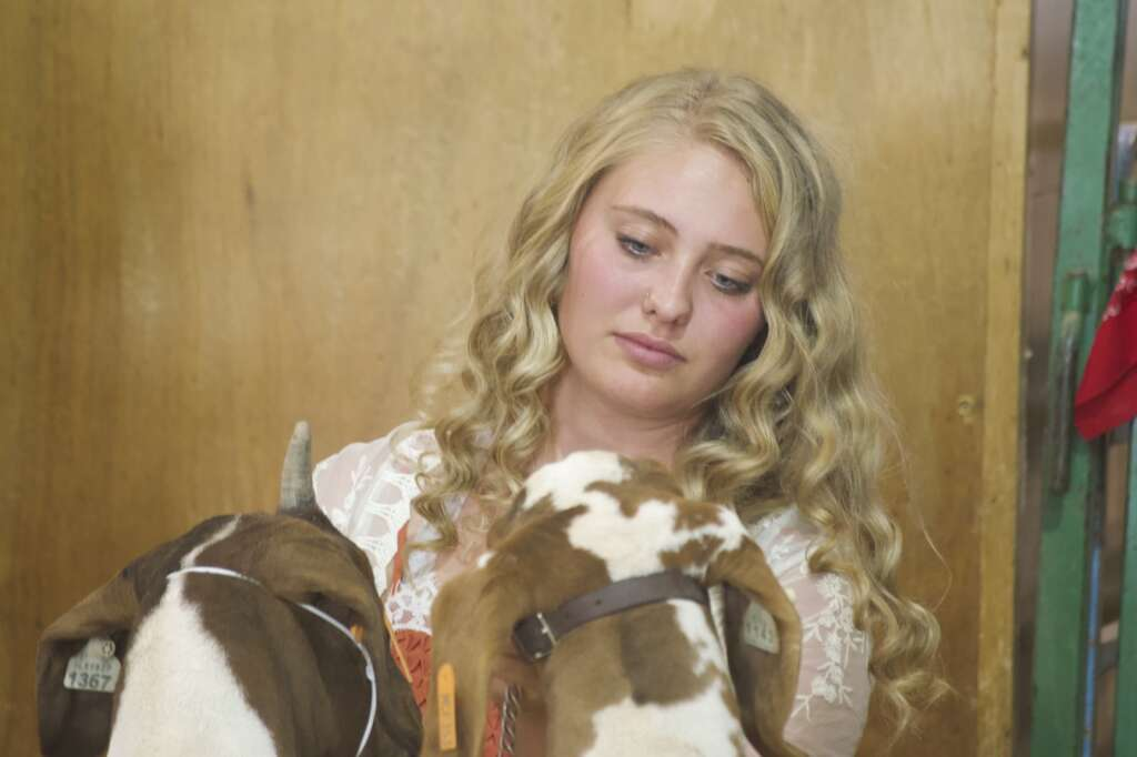 Trinity Boulger tends to her grand champion and reserve grand champion goats at the Moffat County Fair livestock auction Saturday evening. | Cuyler Meade / Craig Press